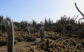 cactus country australia