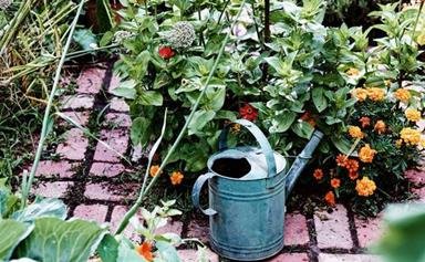 Gardening tips for spring: planting, pruning and preparation