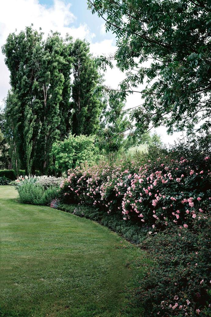 """A hedge of pink 'Bonica' roses frames the lawn of this stunning [garden high on the Monaro Plains](https://www.homestolove.com.au/cold-climate-garden-near-mt-kosciuszko-13726