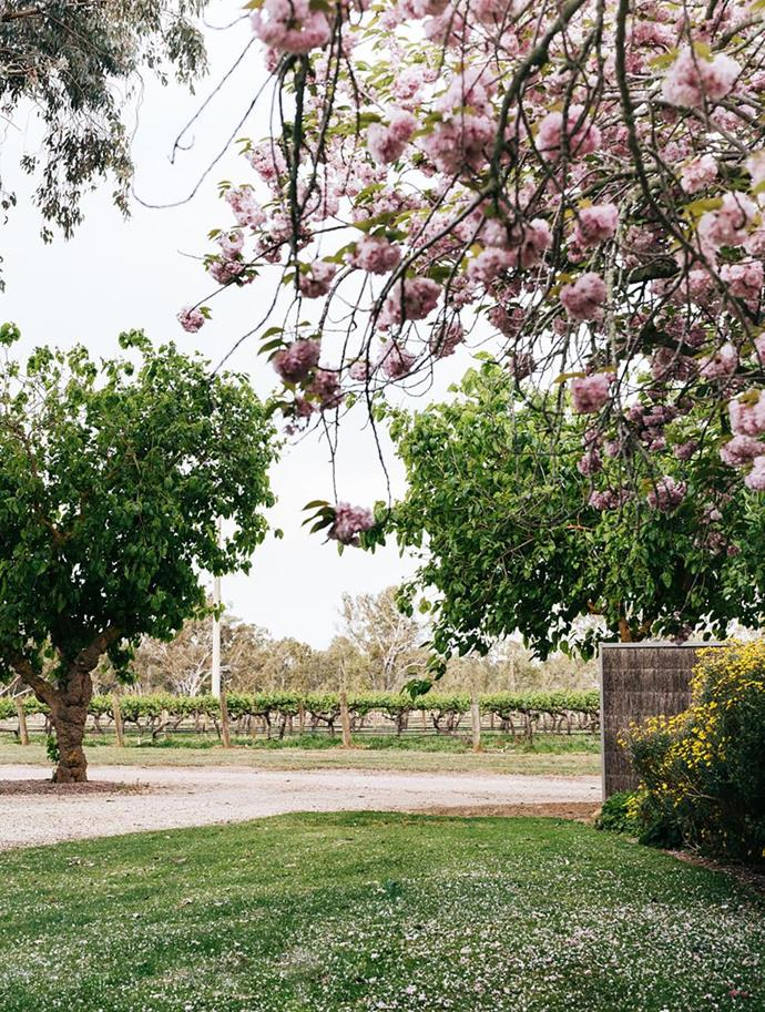 """Rows of riesling grapes grow beyond the blossoming front gate of this [multi-generational winery's lush gardens in country Victoria](https://www.homestolove.com.au/tahbilk-winerys-gardens-victoria-21128