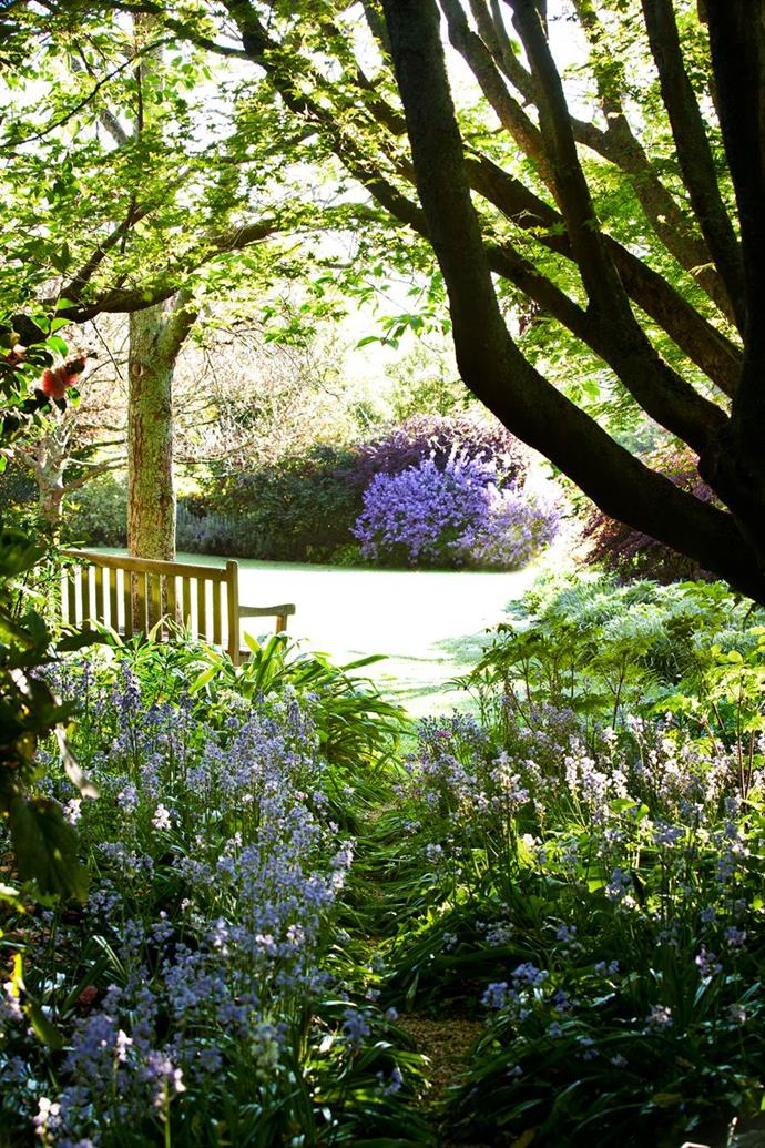 """Bluebells flower under an old maple tree in this [romantic country garden](https://www.homestolove.com.au/romantic-country-garden-transports-visitors-to-another-world-3366