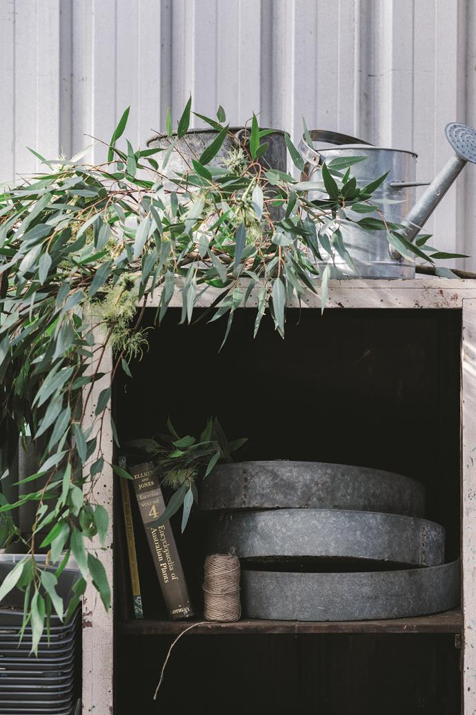 Watering cans and Eucalyptus cornuta cuttings in the seeding shed at Esperance Farm Trees nursery.