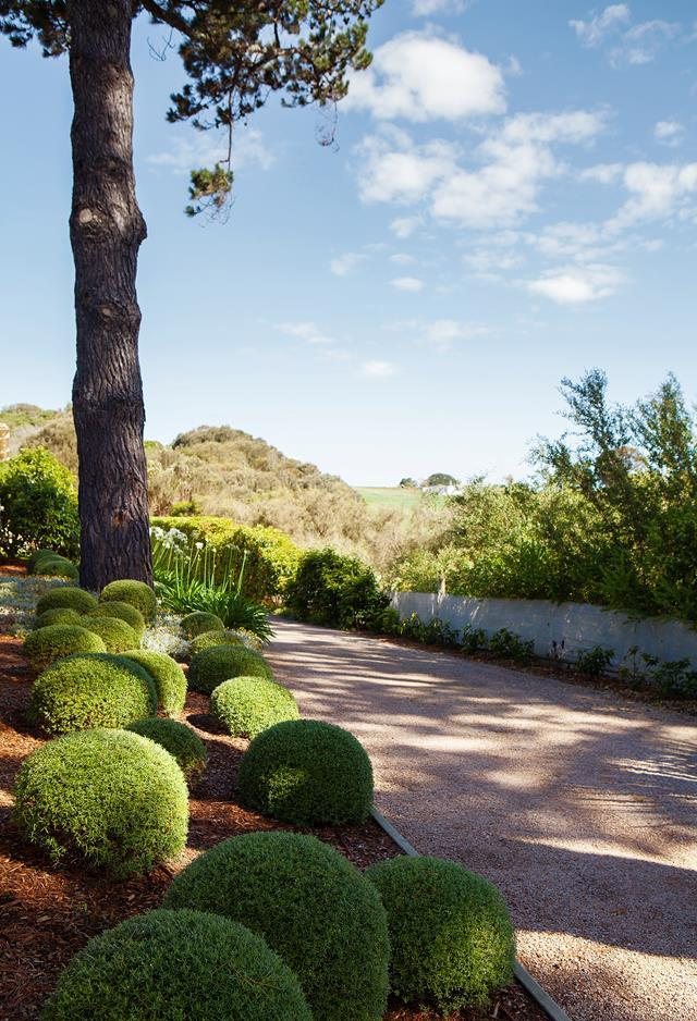"""A judicious trim and sensitive restyling has brought this [Mornington Peninsula property](https://www.homestolove.com.au/mediterranean-style-garden-in-the-mornington-peninsula-20372