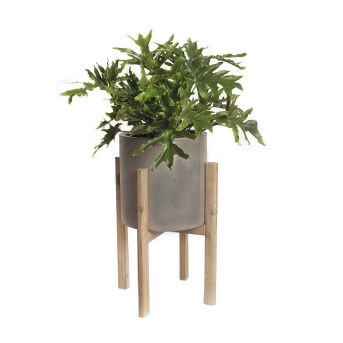 "Moderno planter with stand, $195, [Garden Life](https://gardenlife.com.au/product/moderno-planter-stand/ target=""_blank"" rel=""nofollow"")"
