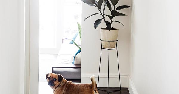 Plant stands: 10 designs to put your greenery on show