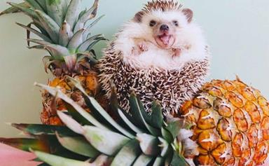 10 of the best pet Instagrams to follow right now