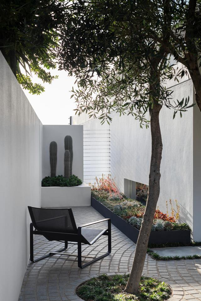 """This [garden](https://www.homestolove.com.au/sculptural-seaside-garden-sydney-21397
