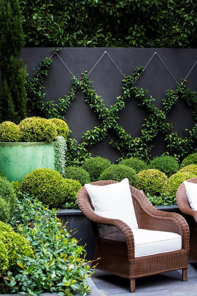 """Star jasmine is trained up a grid of stainless-steel wires to soften the surrounding architectural features. """"It also makes the [courtyard](https://www.homestolove.com.au/25-small-garden-design-ideas-6659