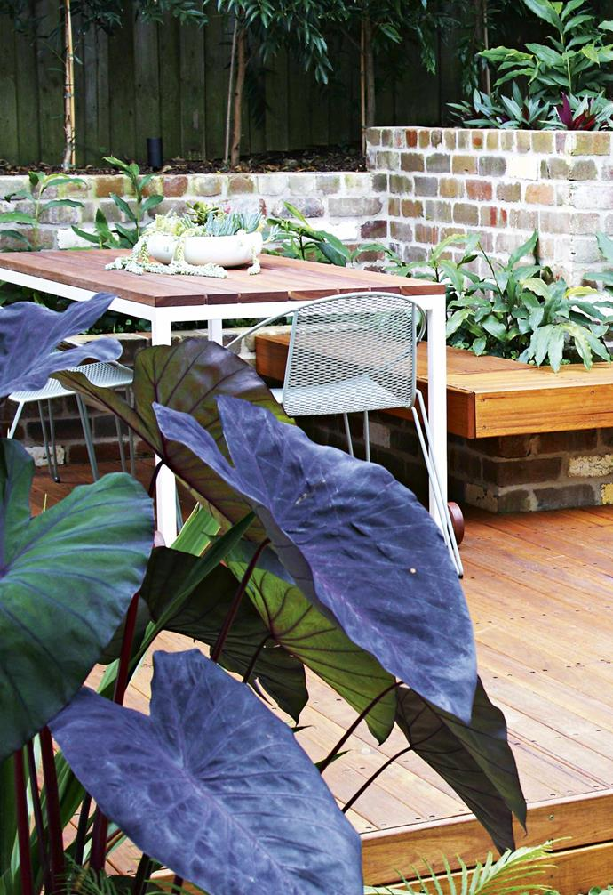 """Kate and Mason are thrilled with the plants, which mostly require little care. Self-confessed non-gardeners ( """"I can [kill herbs](https://www.homestolove.com.au/the-best-herbs-to-grow-15887 target=""""_blank"""") like nobody's business,"""" says Kate), they didn't want to spend lots of time gardening. The twist is that despite their initial aversion to plant care, the couple love their outdoor space so much that they've been spending time looking after it. Mason often wanders into the garden and examines the plants, waters them or simply potters around. For them, this is """"transformational"""". Can a garden change a home and lifestyle? This is living proof.<br><br>*Find out more about Sticks & Stones Landscape Design at [Sticks and Stones Landscape Design](https://www.sticksandstonesld.com.au/ target=""""_blank"""" rel=""""nofollow""""). See info on Custom Creations at [Custom Creations Landscapes](https://www.instagram.com/cclandscapes/ target=""""_blank"""" rel=""""nofollow"""")*."""