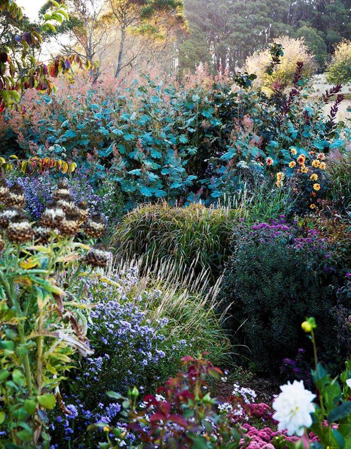 """This [country garden in Hillandale](https://www.homestolove.com.au/perennial-garden-nsw-19850 target=""""_blank"""") is a wonderland of layered, flowering perennials and ornamental grasses. Photo: Claire Takas   Story: House & Garden"""