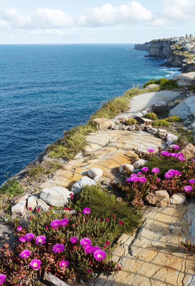 "Clutching the sea cliffs in Sydney's eastern suburbs, this [coastal garden](https://www.homestolove.com.au/clifftop-garden-by-jane-irwin-20433|target=""_blank"") has ""a direct relationship with the ocean,"" says its creator Jane Irwin of Jane Irwin Landscape Architecture. This view is looking south along the cliff edge with existing sandstone augmented with roughback stone and pigface, Casuarina glauca Prostrate and Chrysocephalum apiculatum 'Desert Flame'."
