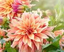 10 beautiful summer flowers to enliven your garden
