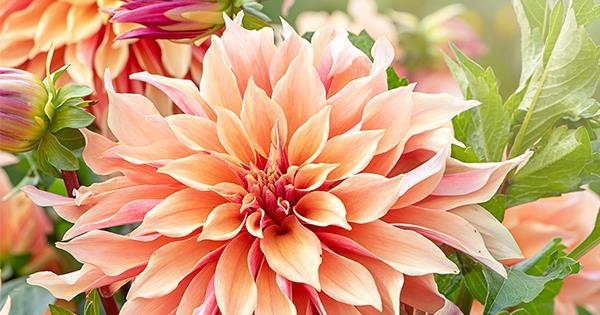 10 best summer flowers