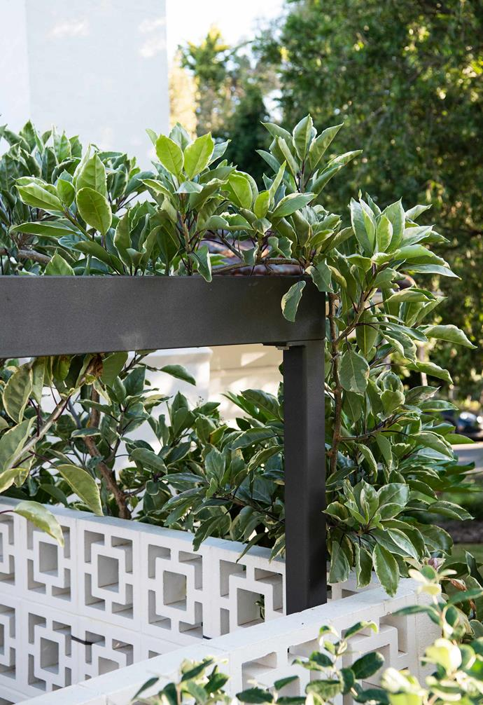 The Honolulu lily will eventually grow right over the pergola, creating beautiful dappled shade in summer.