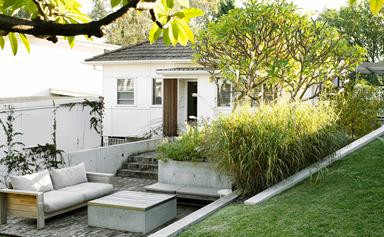 A relaxed beachside garden in Sydney with native plantings