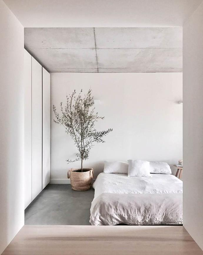A olive tree, textured concrete surfaces and simple, natural decor, give this minimalist bedroom an Mediterranean feel. Photo: courtesy of Mr & Mrs White / Story: Real Living