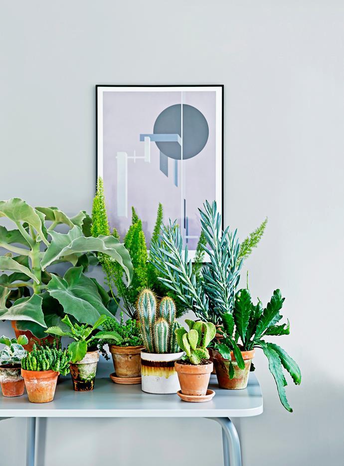 """>> [The best indoor plants for Australian homes](https://www.homestolove.com.au/the-best-indoor-plants-for-australian-homes-2003 target=""""_blank"""")."""