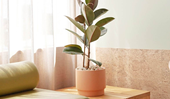 4 indoor plants that are perfect for minimalist homes
