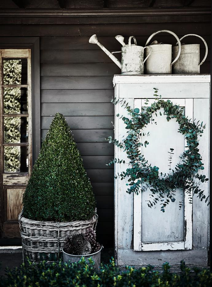 The clipped box Christmas tree sits in an old grape harvesting basket. French watering cans are stored on top of cupboard on the verandah.