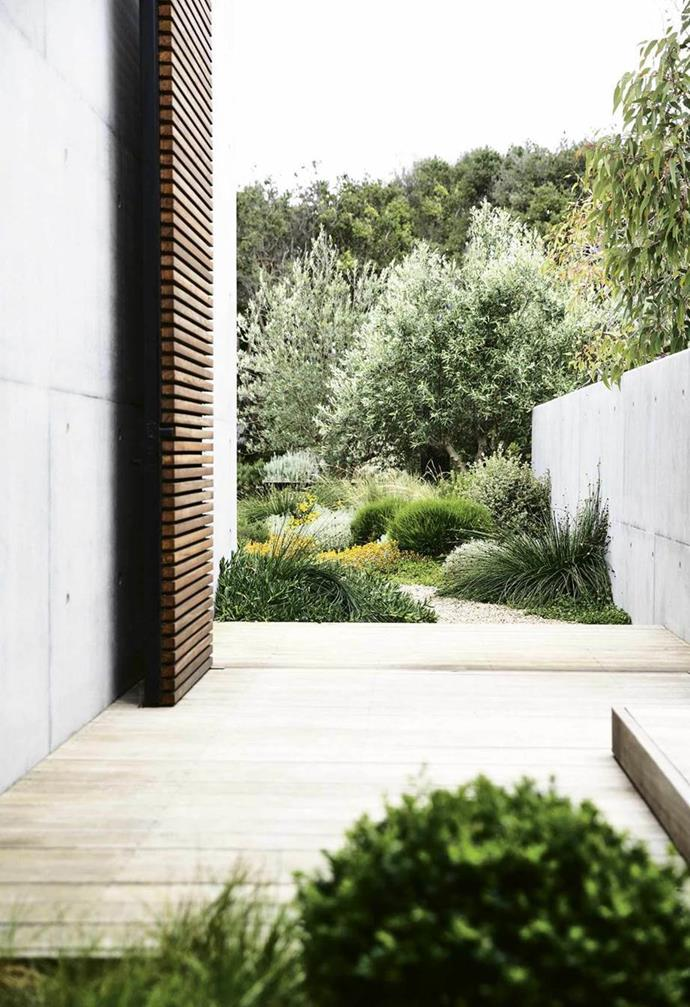 """Indigenous plantings and a coastal aesthetic help blur the boundaries between this [new garden and its beachside location](https://www.homestolove.com.au/coastal-native-garden-18599