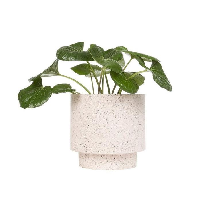"Terrazzo 'Naxos' tall pot, $120, [fenton & fenton](https://www.fentonandfenton.com.au/collections/indoor-greenery/products/naxos-terrazzo-tall-pot-small-27cm-d-x-24cm-h|target=""_blank""