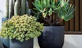 How to keep potted plants cool in summer