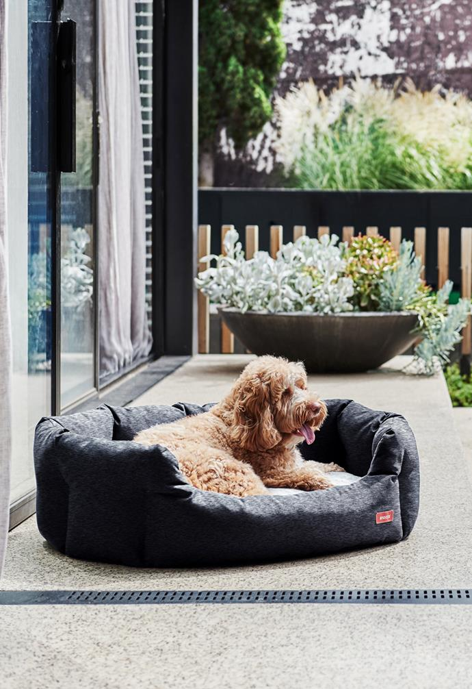 """**SNOOZA**<br><br>While you're busy shopping up a storm, don't forget to treat your furry friends while you're filling up your cart! Australian pet bed manufacturer [Snooza](https://www.snooza.com.au/