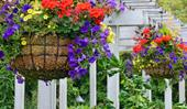 How to make hanging baskets: a step-by-step guide