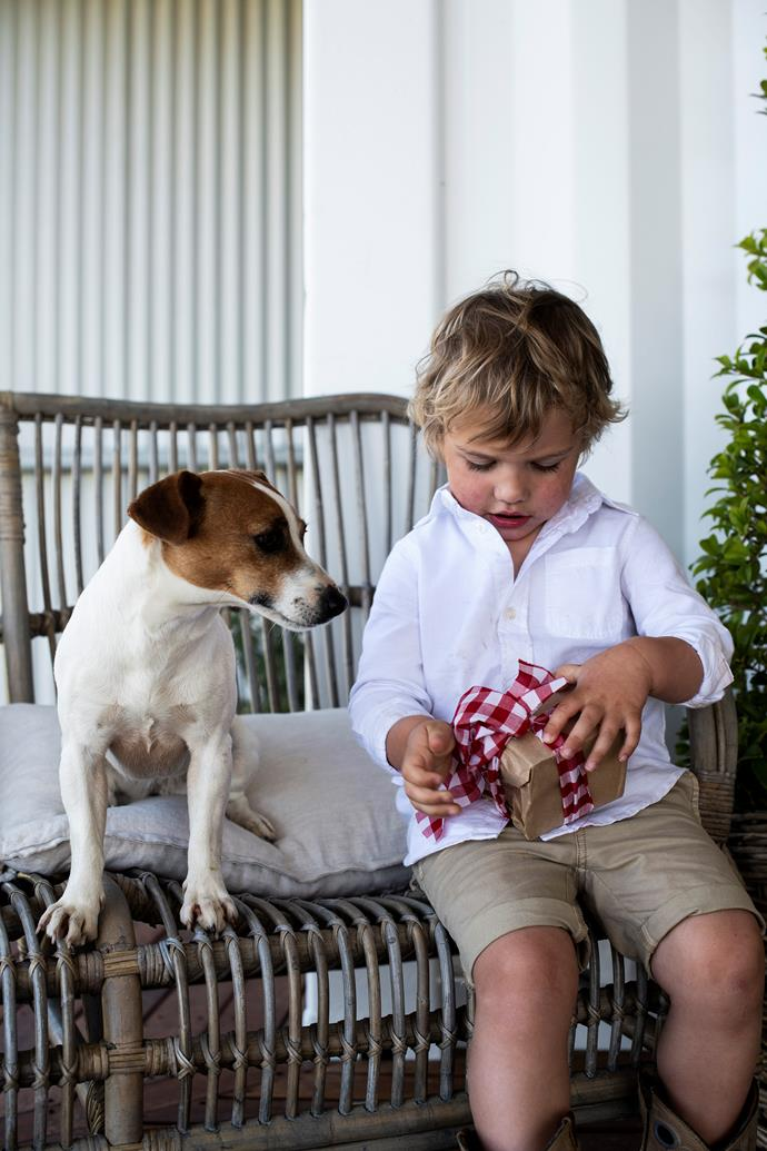 Spot the Jack Russell terrier watches Alfie unwrap a special gift.