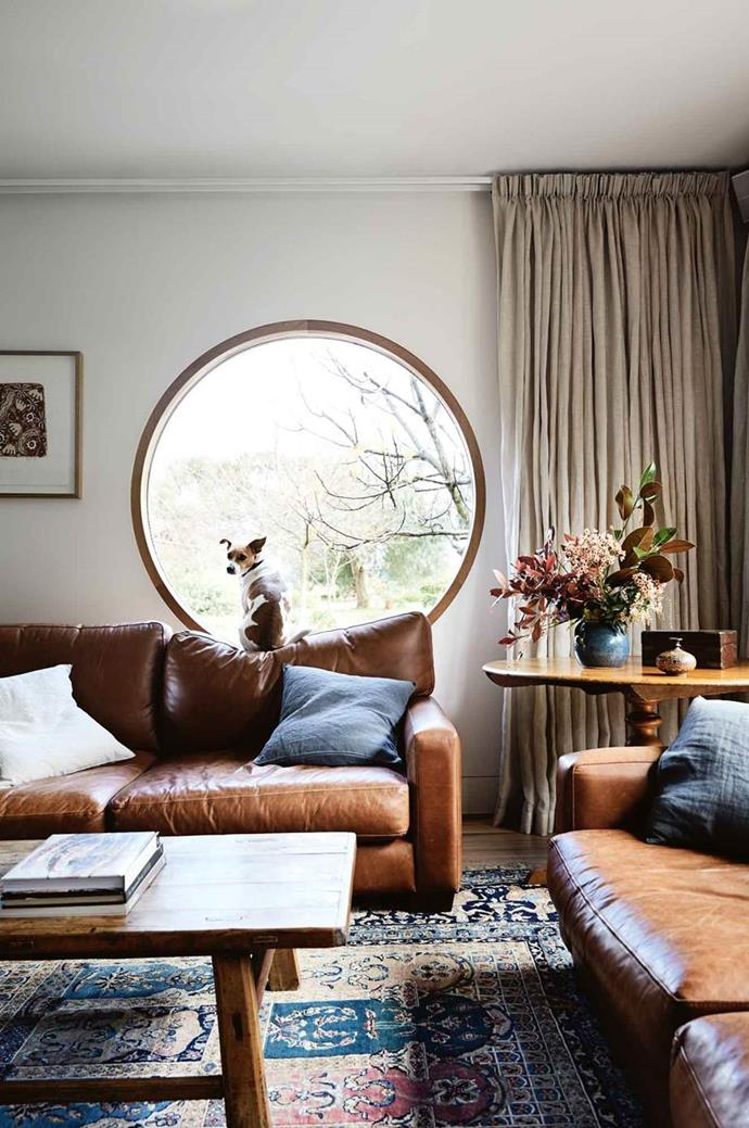 """Harry, a rescued Jack Russell/foxy cross keeps a lookout at the porthole window in the sitting room of this [Australian farmhouse with a modern timber extension](https://www.homestolove.com.au/farmhouse-extension-australia-13815