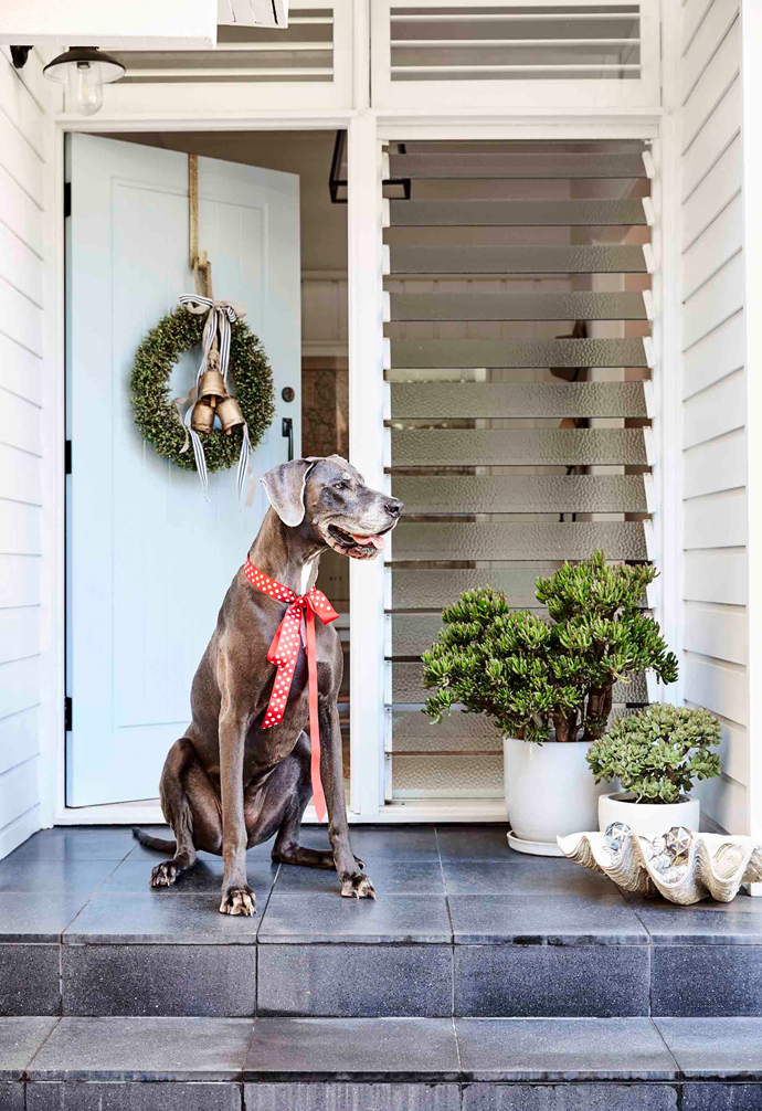 A festive wreath and Great Dane Violet invites guests into the couple's renovated '60s weatherboard.