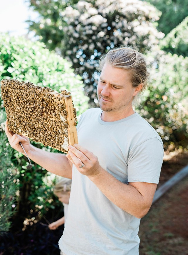 "Roger Mason of [Settler Hives](https://www.homestolove.com.au/coastal-country-cottage-22120|target=""_blank"") inspects a bee frame. Keeping honeybees is regulated across Australia."