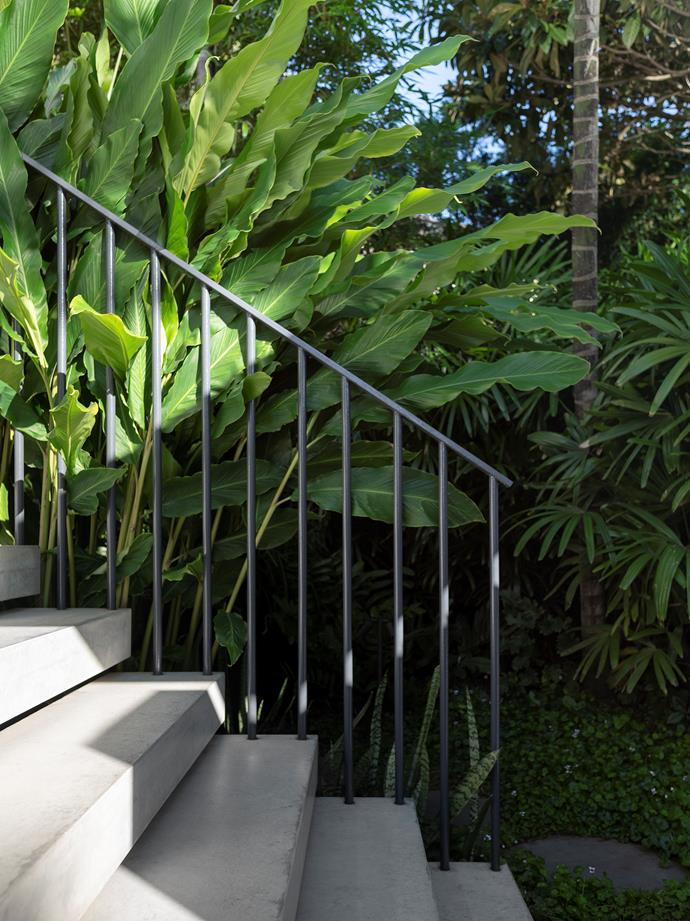 Shade-tolerant dwarf cardamom (*Alpinia nutans*) and hardy and fast-growing Slender Weaver's bamboo (*Bambusa textilis var. gracilis*) offset the sharp lines of the floating staircase leading to the front door.