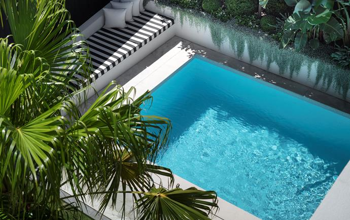 The newly tiled pool and its inviting angled daybed – recline at one end, simply sit at the other – sit under the fronds of a cabbage palm.