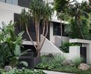 A lush Sydney garden inspired by Palm Springs
