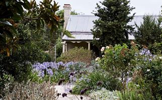 Gravel pathway leading to a house flanked by a garden designed by Edna Walling