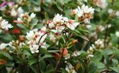 5 top-performing flowering shrubs for a lush garden