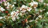 5 top-performing flowering shrubs for a lush garden