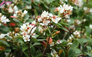 Top performing shrubs are the unsung heroes of the garden