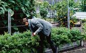How to start a community garden