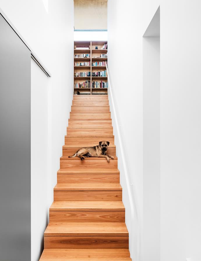 Mungo the border terrier relaxes on the stairs leading to the boys' bedrooms. A library wall makes good use of otherwise 'dead' space.