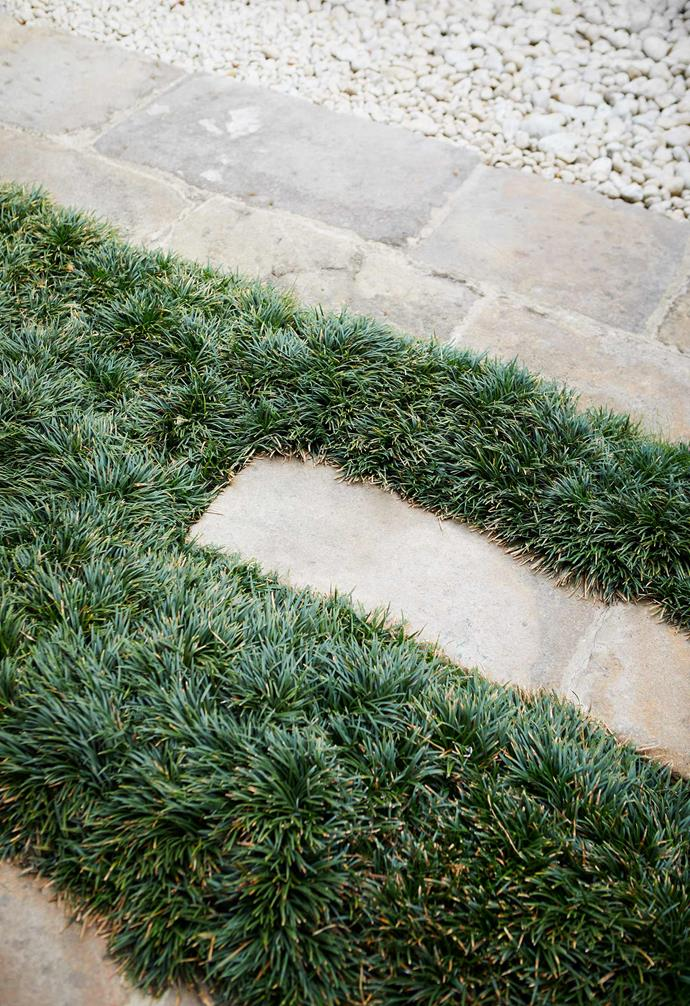 **Design detail** Sandstone slabs have been recycled from the old garden and intermingled with a dwarf mondo grass carpet to add softness and visual interest on the ground plane.
