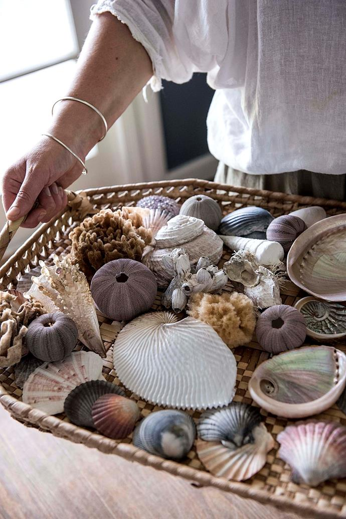 The shells collected from the beaches along the coast.