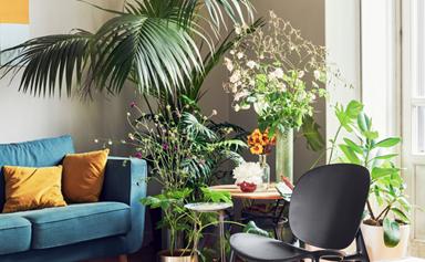 15 best indoor plants for your home