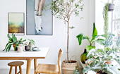 The best indoor plants for Australian homes and how to style them