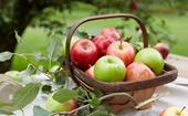 How to grow and pick your own fresh apples