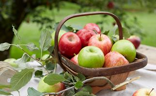 Freshly picked red and green apples in a basket