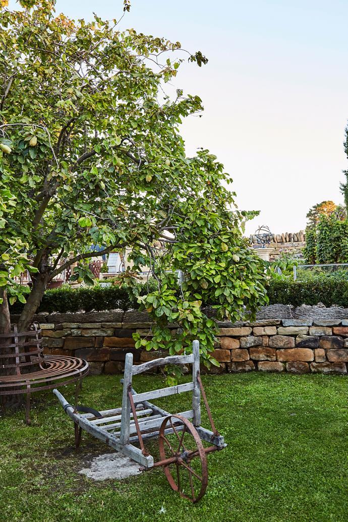 In addition to providing delicious fruit, apple trees make wonderful medium-sized shade trees.