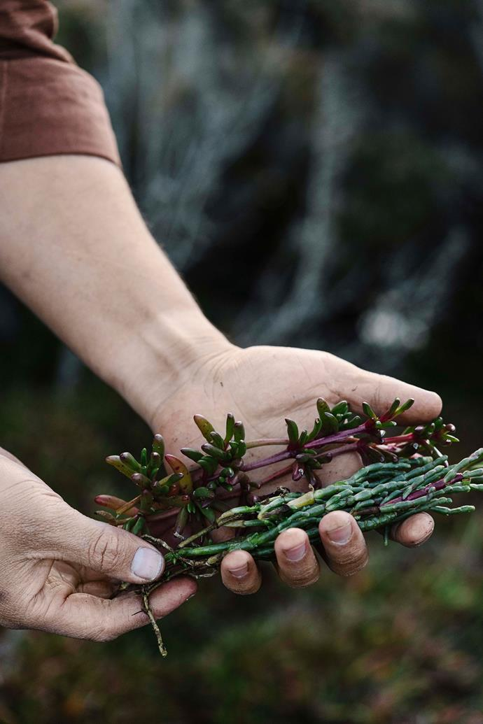 Fresh is best, says Tobin who enjoys foraging and finding edible flowers and herbs to use in dishes at Moonah.