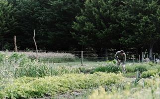 Chef Tobin Kent in his organic kitchen garden